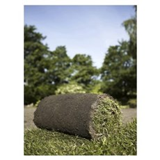 Turfline Græsfrø - Rullegræs